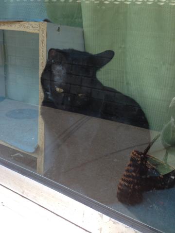 黒ネコのじゃじゃ丸_c0185356_15131601.jpg