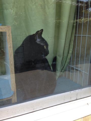 黒ネコのじゃじゃ丸_c0185356_15312523.jpg