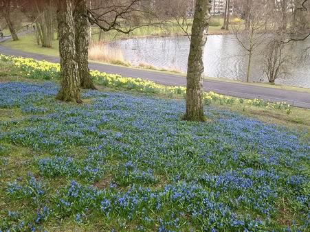 「春が来た~」_a0280569_23292411.jpg