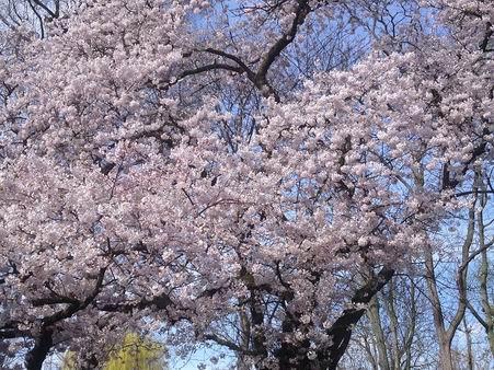 「春が来た~」_a0280569_23293948.jpg