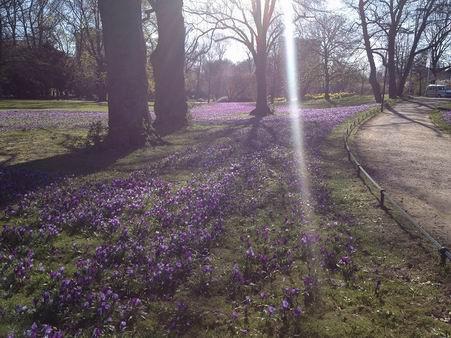 「春が来た~」_a0280569_23302557.jpg