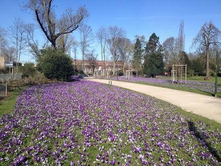 「春が来た~」_a0280569_2330670.jpg