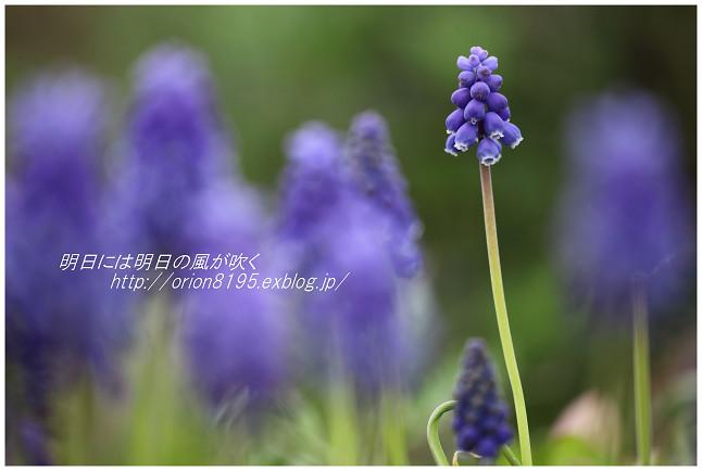 f0361079_20550351.jpg