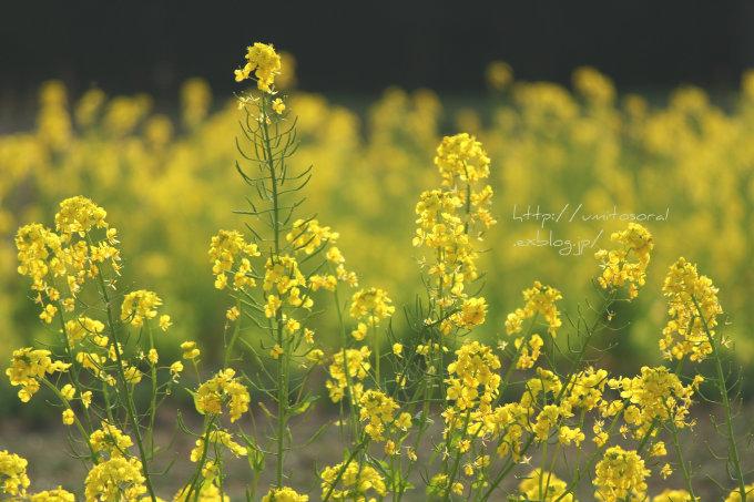 春の公園_b0324291_19241398.jpg
