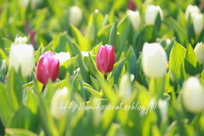 春の公園_b0324291_19241579.jpg
