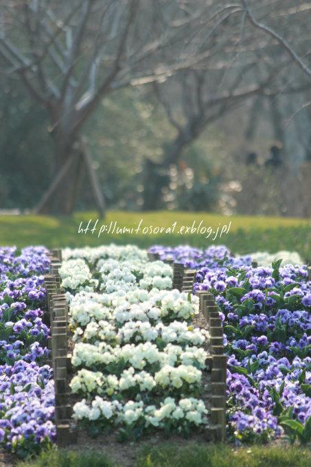 春の公園_b0324291_19241753.jpg