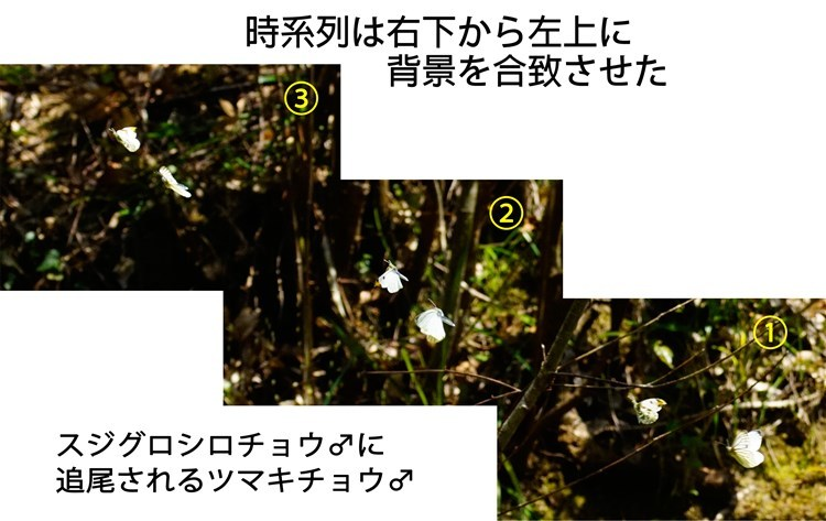 d0272107_09310740.jpg