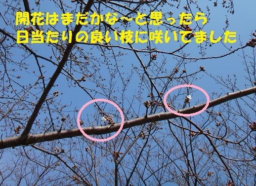 f0121712_07405858.jpg