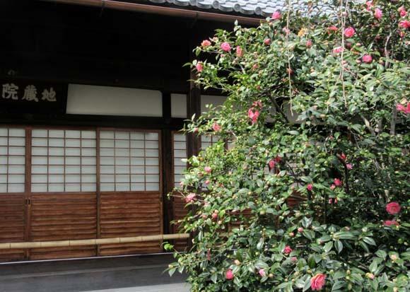 地蔵院 五色散りツバキ_e0048413_17334250.jpg