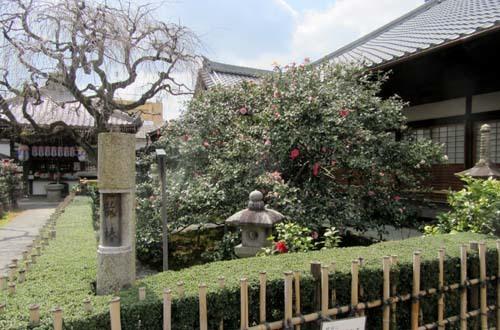 地蔵院 五色散りツバキ_e0048413_17334748.jpg