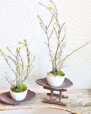 桜 開花_d0263815_17491960.jpg