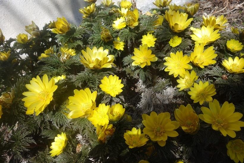 ようやく春らしく_e0112417_21324778.jpg