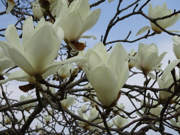 花いっぱい_b0163121_22203552.jpg