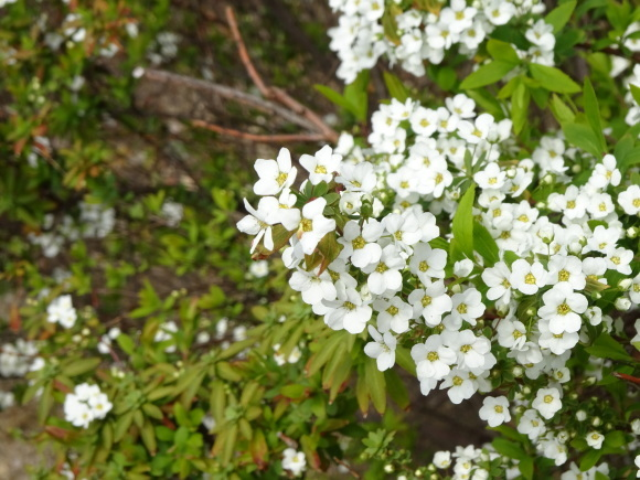 花いっぱい_b0163121_22210507.jpg