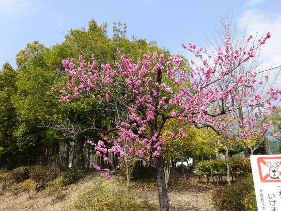 花いっぱい_b0163121_22213680.jpg