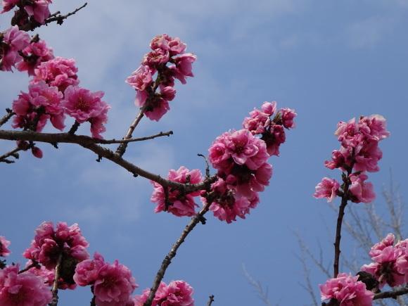 花いっぱい_b0163121_22220215.jpg