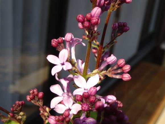 花いっぱい_b0163121_22222735.jpg