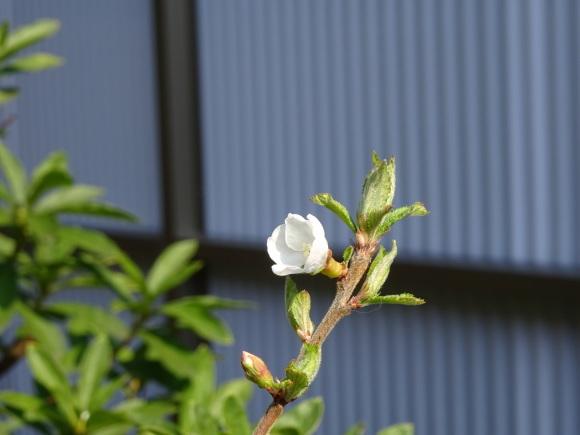花いっぱい_b0163121_22225640.jpg