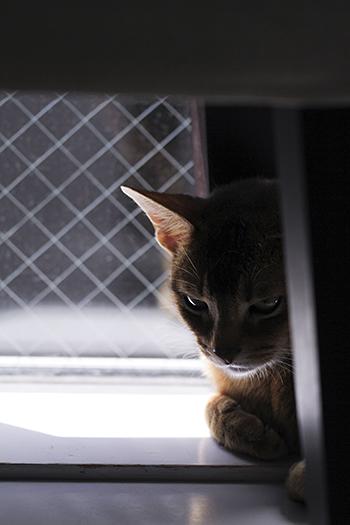 [猫的]節電_e0090124_22531292.jpg