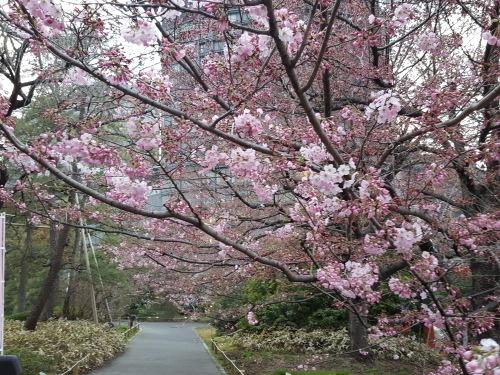 桜が咲きだすとクレージーになるのよ 映画「アシュラ」&「落語研究会」&トム・ウエイツ_e0016828_11353525.jpg