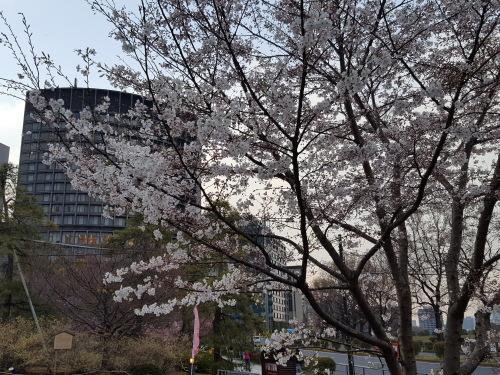 桜が咲きだすとクレージーになるのよ 映画「アシュラ」&「落語研究会」&トム・ウエイツ_e0016828_11384614.jpg