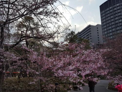 桜が咲きだすとクレージーになるのよ 映画「アシュラ」&「落語研究会」&トム・ウエイツ_e0016828_11393936.jpg