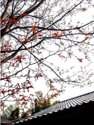 土井康生 鉄の華灯り展 3月31日(金)~_b0237338_09372558.jpg