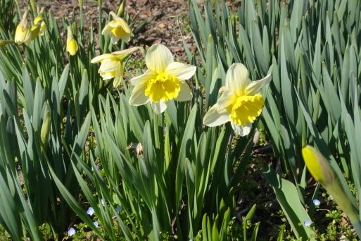 春集め2_e0226943_23310102.jpg