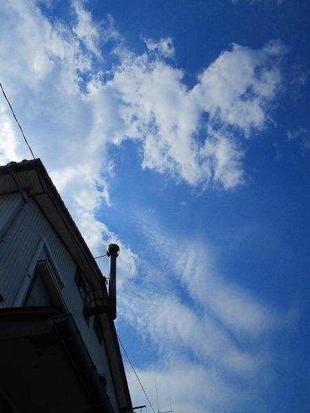 今日の空、雲、きーちゃん_c0327752_16363001.jpg
