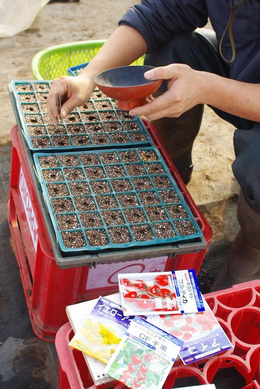 ミニトマトの種まき_c0110869_9175863.jpg