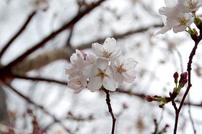 3月29日(水)今日の渋谷109前交差点_b0056983_21183016.jpg