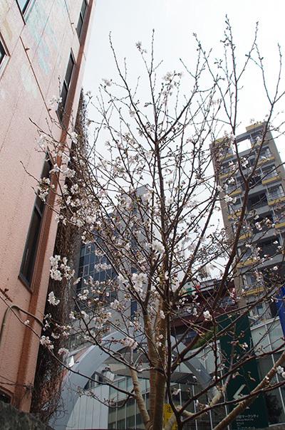 3月29日(水)今日の渋谷109前交差点_b0056983_21183112.jpg