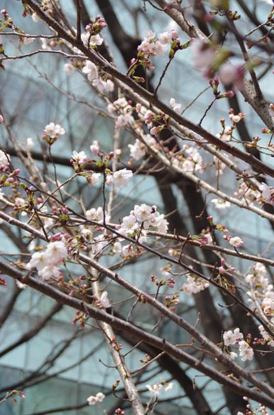 3月29日(水)今日の渋谷109前交差点_b0056983_21183181.jpg