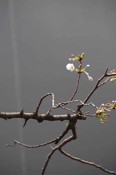 3月29日(水)今日の渋谷109前交差点_b0056983_21183225.jpg