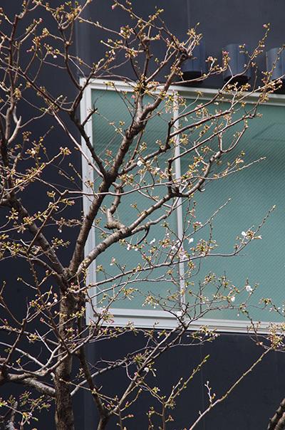 3月29日(水)今日の渋谷109前交差点_b0056983_21183286.jpg