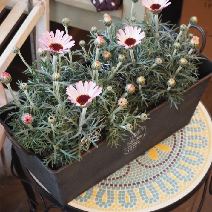春のお花の買い方_a0292194_1853272.jpg