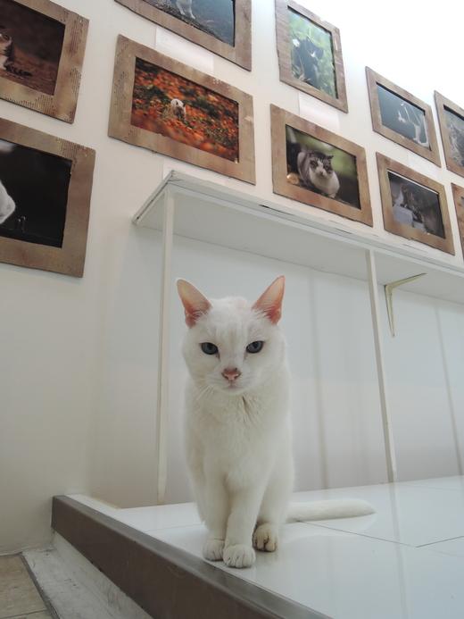 河井蓬「Downtown Cats」 × 中川こうじ「のらねこ」 は終了しました。_f0138928_13214096.jpg