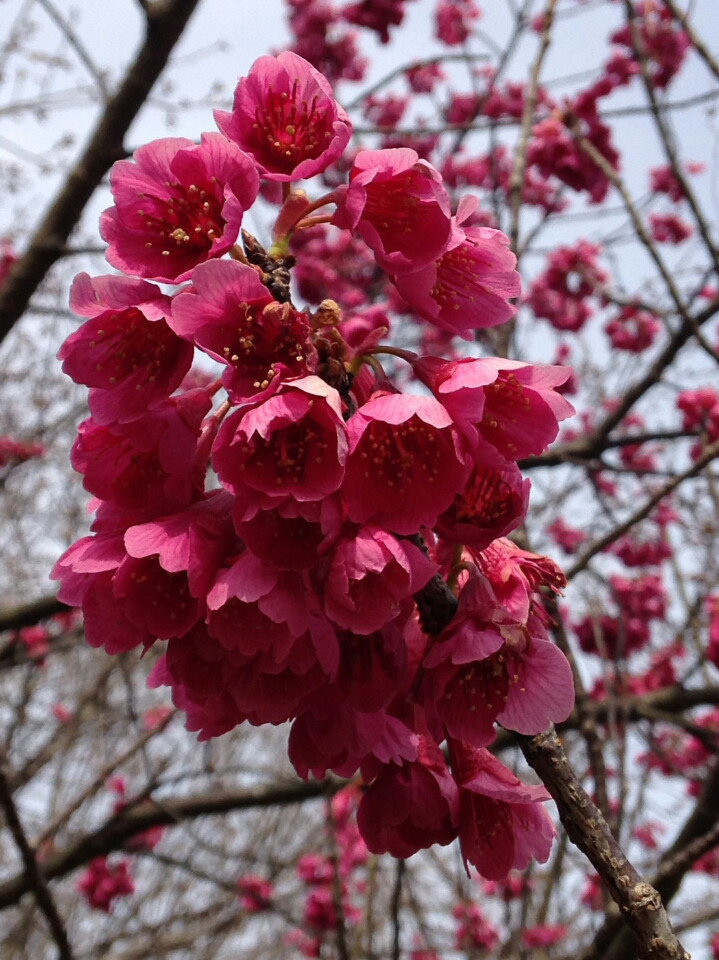春だけど_f0343531_10052070.jpg