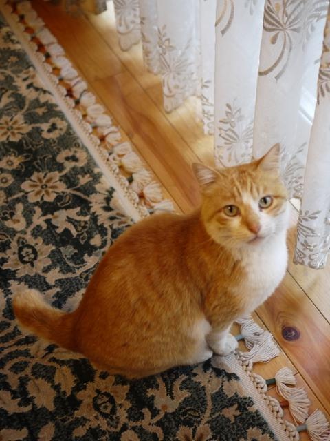 猫のお留守番 みるくくん編。_a0143140_21202851.jpg