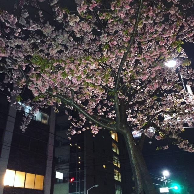 Daily Photo/2017_03_30_e0121640_17264367.jpg