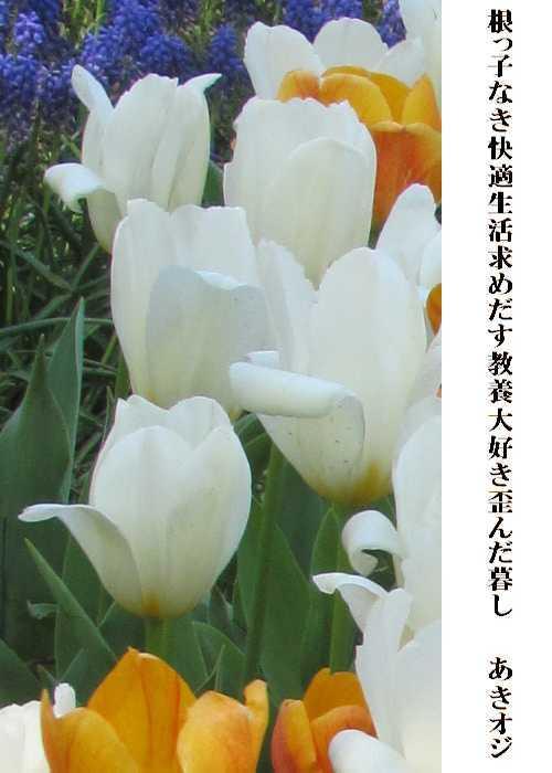 f0117041_14332341.jpg