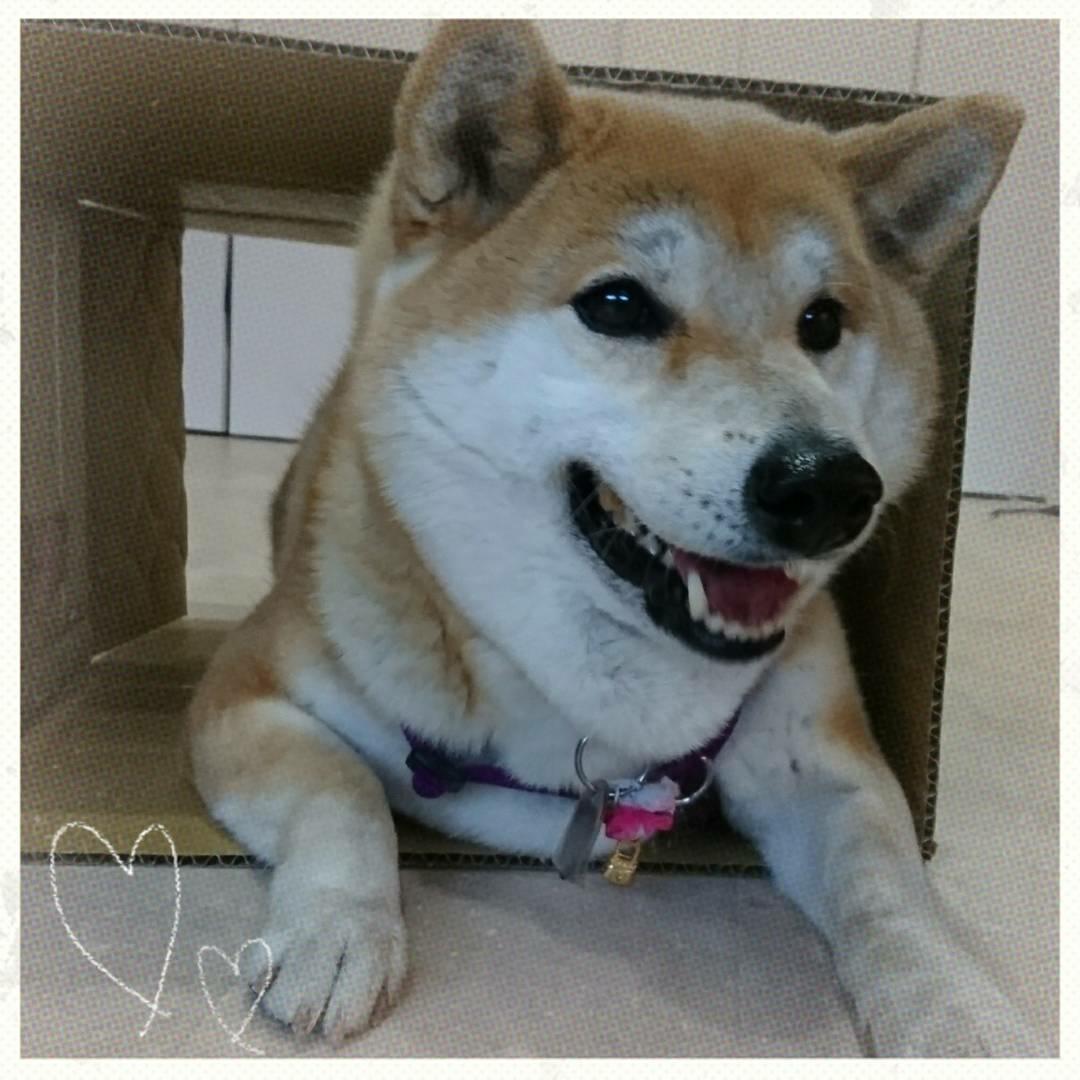 3月30日(木)…犬との暮らし方教室&パソコン教室_d0256356_06275071.jpg