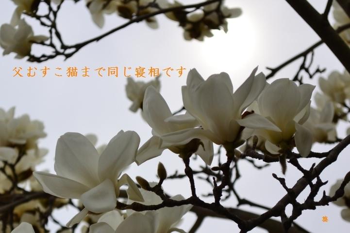 f0379160_16044571.jpg