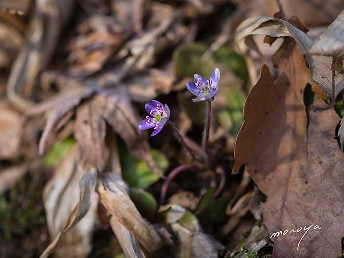 春の野に_c0085877_3395831.jpg