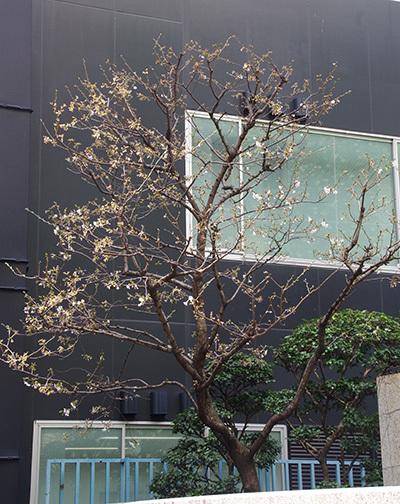3月31日(金)今日の渋谷109前交差点_b0056983_19503682.jpg