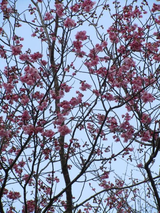 春は花とともに_e0303187_21233849.jpg