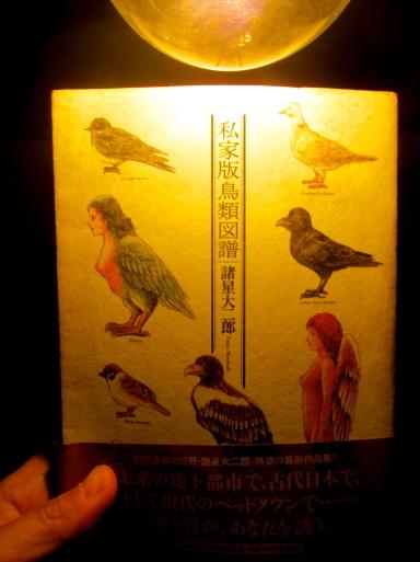 鳥の遊び、木琴の上で。_e0074793_17585261.jpg