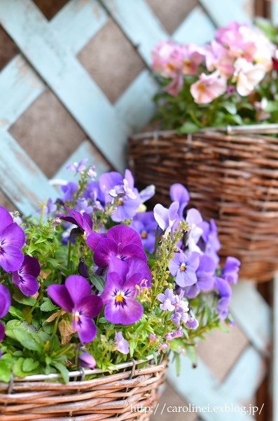 3月終わりの庭  My Spring Garden_d0025294_13413179.jpg