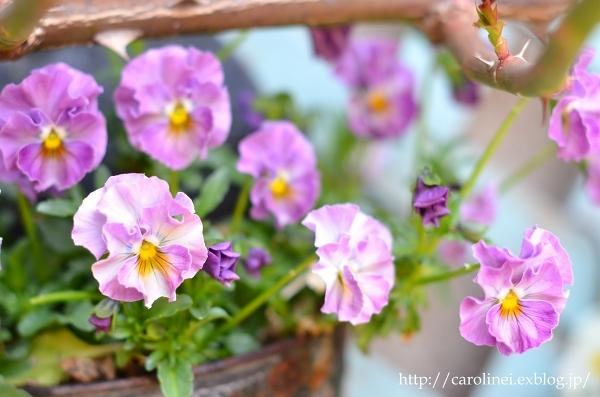 3月終わりの庭  My Spring Garden_d0025294_13422021.jpg