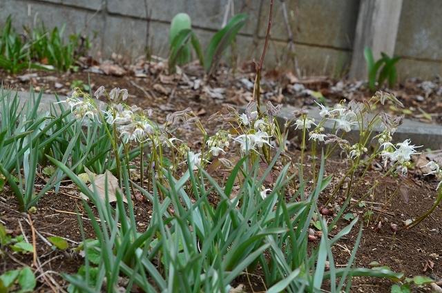 3月29・31日の庭。_c0124100_16343187.jpg
